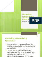 Gametos Femeninos y Masculinos