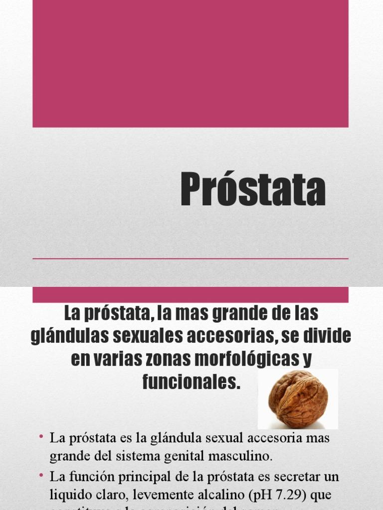 glándula accesoria de próstata