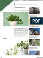 6 Plantas de Interior Que Purificarán El Aire de Tu Casa