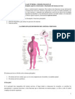 Clase 01 Fisiopatología II Doc Principales Aspectos Estructurales y Funcionales Del Sistema Nervioso