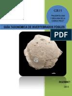 Guía Taxonomica de Invertebrados.III