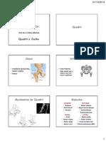 Aula 05 - Quadril e Joelho(1).pdf