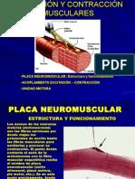 Fisiol Placa