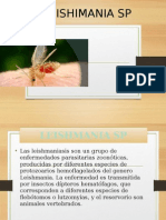 Leishimania Sp