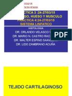Histología - Cartilago, Hueso, Músculo Tejido Linfático