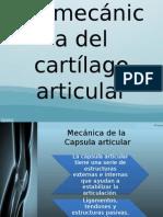 Biomecánica Del Cartílago Articular