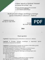 Studii privind ecologia, morfologia și biologia speciei Dichanthium ischaemum L. Roberty