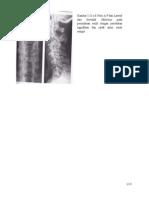 Radiologi Tari