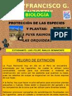 Trabajo de Felipe Orquidea Puya-Luis Quille
