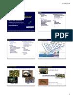 Amphibian Biology 2014