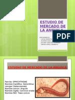 ESTUDIO DE MERCADO DE LA ANGUILA.pptx