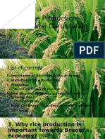 Rice Production.pptx