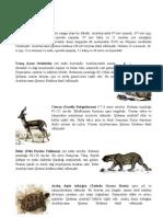 Fauna mətn