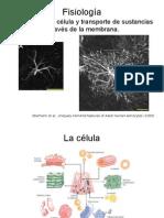 Clase 2 - Fisiología de la célula y transporte de sustancias a través de la membrana.pdf