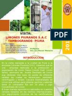 Limones Piuranos