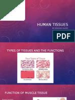 human tissues1