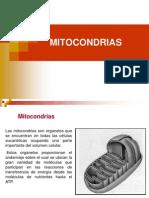 3 Mitocondrias Citoesqueleto Cilios y Flagelos.