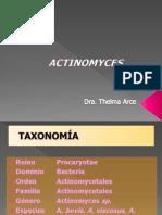actinomyces