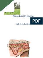 Reproduccion_equinos1