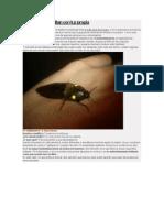 5 Insectos Que Brillan Con Luz Propia