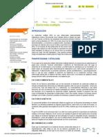 10. Esclerosis Multiple