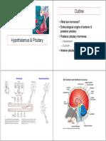 18 Hypothalamus Pituitary Oxytocin-4pp (2)