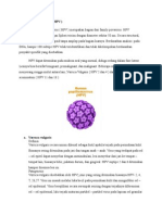 Human Papiloma Virus