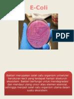 e-coli ppt.pptx