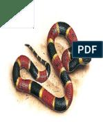 Coral Snake.pdf