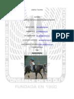 Equinoterapia_04_CSO_PSIC_PICSJ_E
