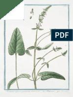 Medicine Plants.pdf