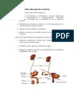 Generalidades del aparato urinario