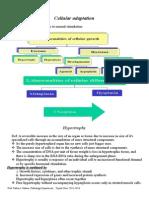 Cellular adaptation-1.doc