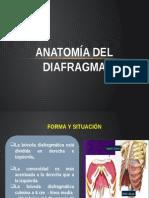 Anatomía Del Diafragma