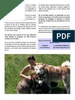 Revista Canina Página 11