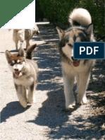revista canina_Página_12.pdf