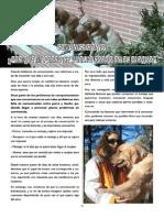 Revista Canina Página 16