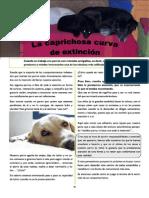 Revista Canina Página 20
