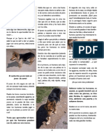 Revista Canina Página 24