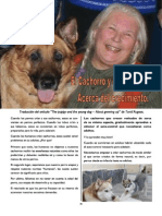 Revista Canina Página 26
