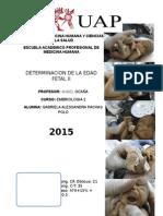 Determinacion Edad Fetal II- Gabypachas