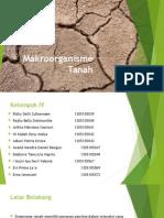Makroorganisme tanah