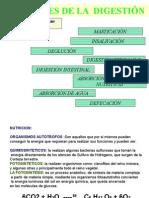 AP. Digestivo2
