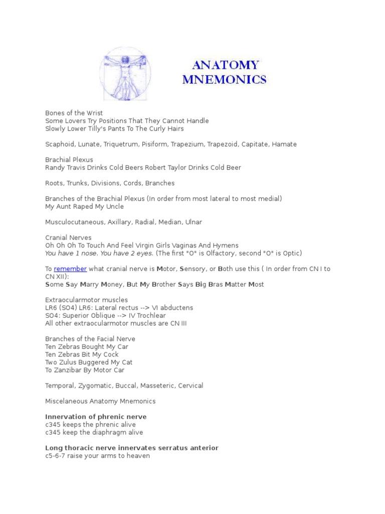 Anatomy Mnemonics Usmle | Common Carotid Artery | Aorta