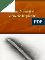 VIRUSURI ȘI VIROZE LA PLANTE.ppt