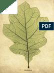leaf.pdf