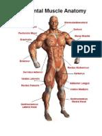Musculos en ingles