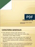 Division Phaeophyta Ver97 2003