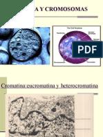 Cromosomas Cromatina y La Herencia POWER POINT