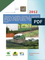 Perfil Del Proyecto Promoción de Incentivos Forestales Puerto Cabezas 2012